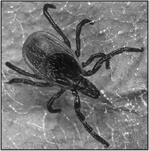 Prevent Tick-Borne Diseases While Enjoying The Outdoors