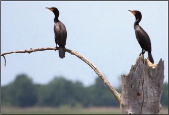 Love Birding? Check Out The Horicon Marsh Bird Club