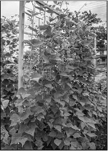 Get Maximum Yield From Minimal   Garden Space
