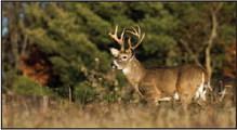 Deer Season Is Here