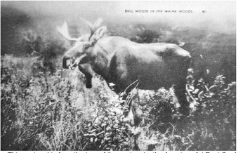 What Was Lost (Part 11): The Moose